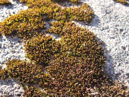 Moss on marges of a wood. photo