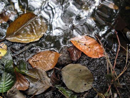 Leaves. photo