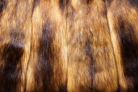 visone: Visone pelliccia di sfondo Archivio Fotografico