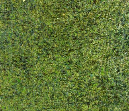 alga: Dried nori alga sheet Stock Photo