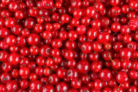 red currant: Red currant berries background