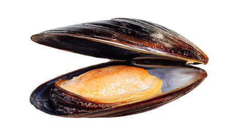 mussel: Boiled mussel isolated on white Stock Photo