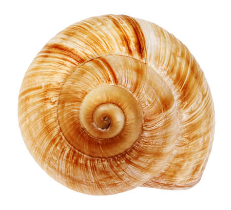 Snail shell isolated on white