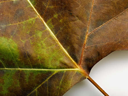 background from fallen leaf closeup Stock Photo - 12414201