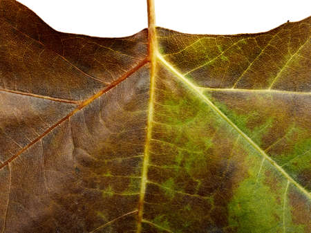background from fallen leaf closeup Stock Photo - 12414199