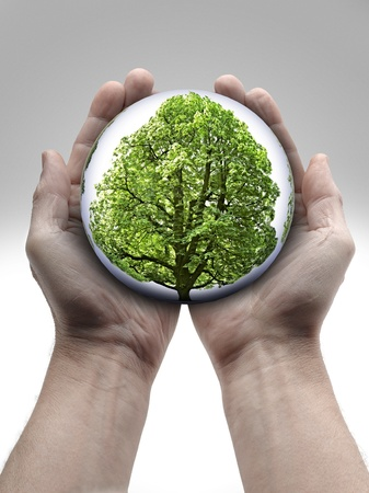 a Tree in human hands on white background Stock Photo - 16432339
