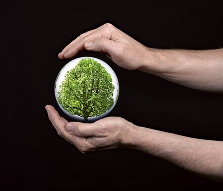 human hands protecting tree Stock Photo - 16432338