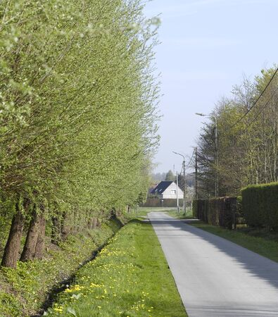 road with alley of trees Stock Photo - 17363896