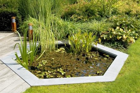 back yard pond: Garden Pond Stock Photo