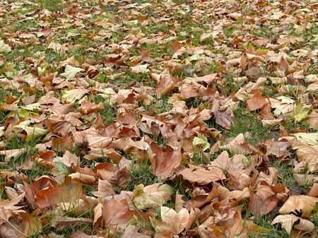 Dead leaves shot ideal for backgrounds and textures Stock Photo - 19376042