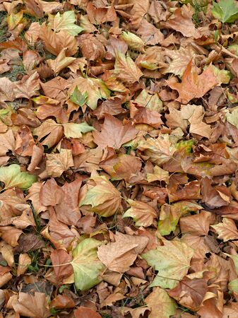 Dead leaves shot ideal for backgrounds and textures photo