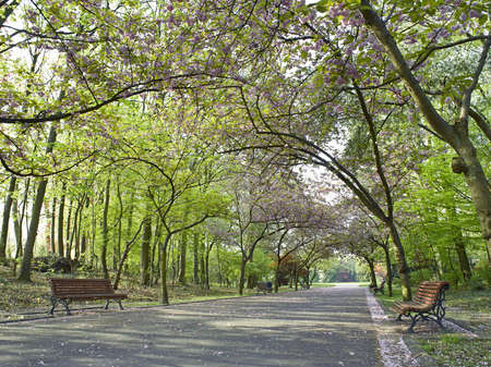 Beautiful park alley in spring Stock Photo - 19376047