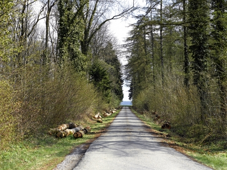 Forest road. Landscape. Stock Photo - 19376056