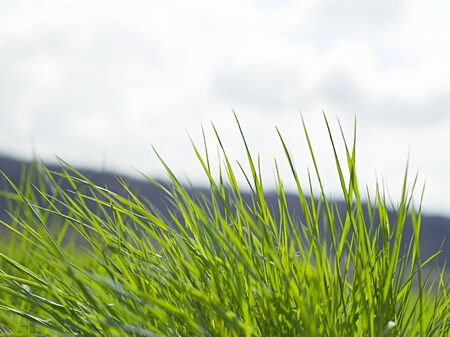 natural green grass with selective focus Stock Photo - 19376046