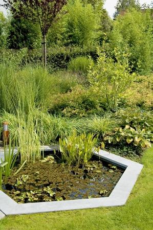 Teich in einem üppigen Garten