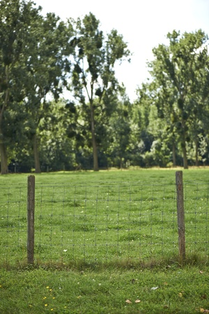 fencepost: Fencepost and Meadows