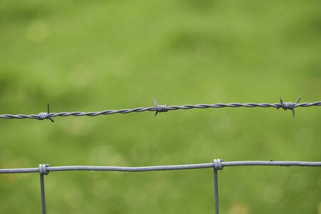 barbed wire on green background photo