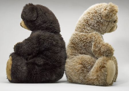 angry teddy: Two small teddy bear sitting rug to rug Stock Photo