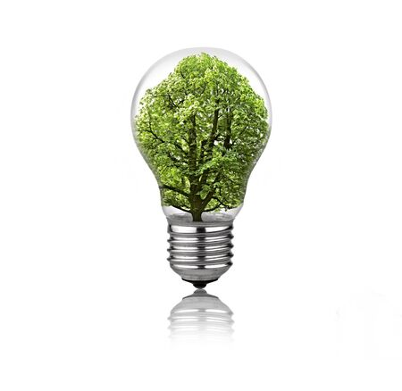 Lightbulb with tree inside isolated on white background Stock Photo