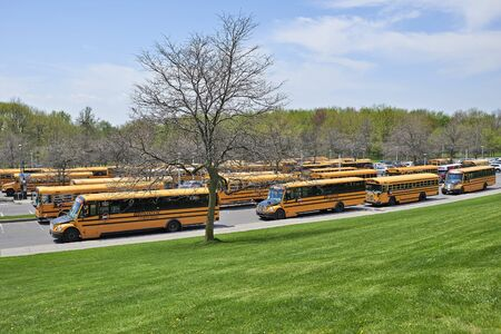 molson: MONTREAL, QUEBEC, CANADA - 18 MAY 2017: Lot of school buses waiting for children in a parking at the Mont Royal in Montreal
