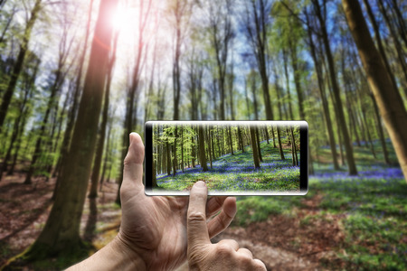 Two hands holding a mobile Smartphone and take a picture in forest of bluebell flowers Stock fotó