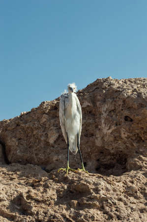 red sea: wild nature on the red sea Stock Photo