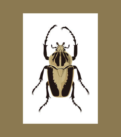entomology: Realistic Goliath geant vector illustration Illustration