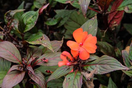 Some Orange flowers