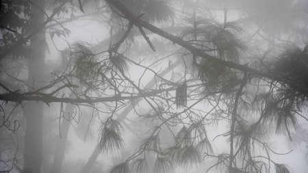 A Creepy Mist