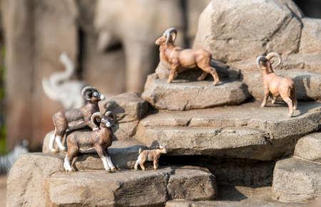 mountain goats: Miniature mountain goats