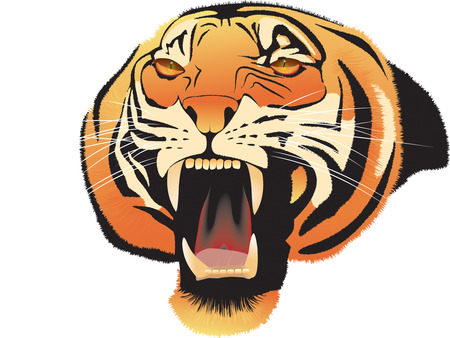 Muzzle of the growling shown furious tiger Illustration