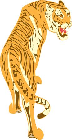 agression: Le tigre grognements qui grimpe vers le haut sur un chagrin