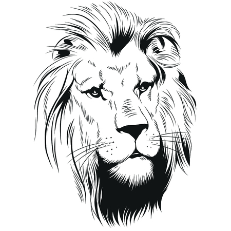 Vector stock illustration. Head of a lion. King of beasts.