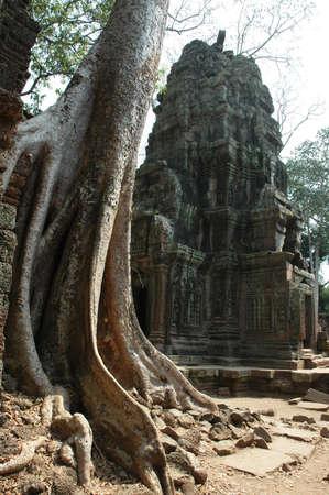 raider: Tomb Raider Temple, Ta Phrom, Siem Reap, Cambodia