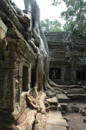 phrom: Tomb Raider Temple, Ta Phrom, Siem Reap, Cambodia