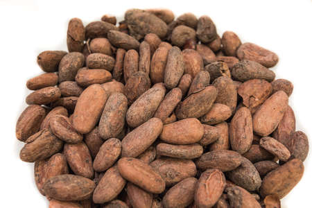 cocoa bean: Isolated raw cocoa bean on white background