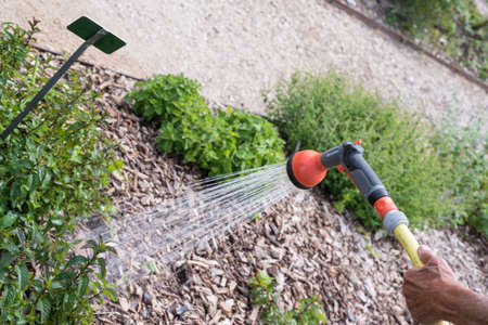 regando plantas: Un jardinero está regando las plantas en el jardín Foto de archivo