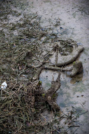 emptying: Old bycicle burried in the sludge with algae during the emptying of the canal St-Martin