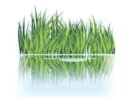 Grass silhouettes background with reflection in water Vector