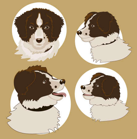 Four drawings  head of the dog from different angles Stock Vector - 17814901