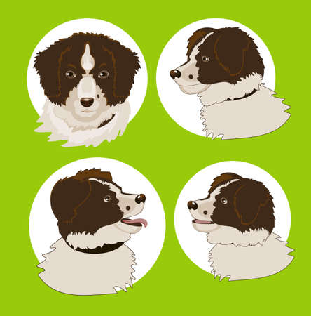 border collie: Four images of the dogs head in different corners Illustration
