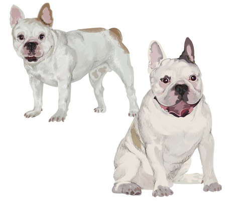 Two images of white French bulldog in different poses on isolated background
