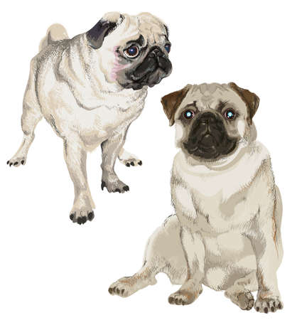 Two pictures of a white pug in different poses