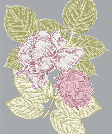 Vintage postcard with rose flowers.  Vector illustration. Illustration