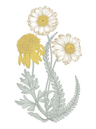 Isolated image of a field  flowers in  vintage style Illustration