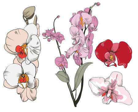 vector image of the orchid floweres  in vintage style