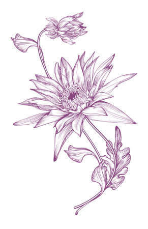 Realistic image of the chrysanthemum  in  vintage style, stylized as  a hand-drawing