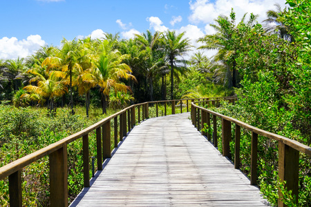 Perspective of wood bridge in deep tropical forest. Wooden bridge walkway in rain forest supporting lush ferns and palms trees during hot sunny summer.