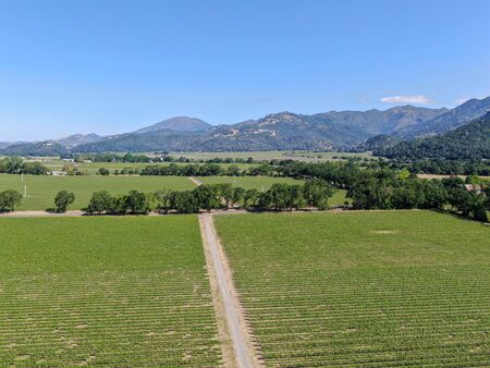 Aerial view of vineyard in Napa Valley during summer season. Napa County, in California Wine Country. Imagens