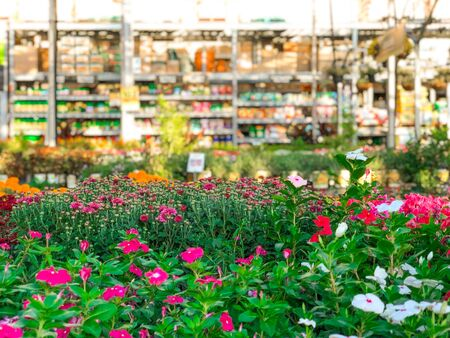 Rows of colorful flowers and plants for sale at a garden nursery center and green house.